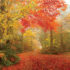 Helen Georgia Fall Foliage