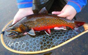 Fish In North Georgia