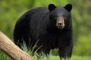 Wildlife of North Georgia: Mammals